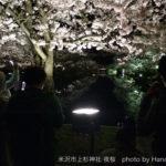 米沢市上杉神社の夜桜