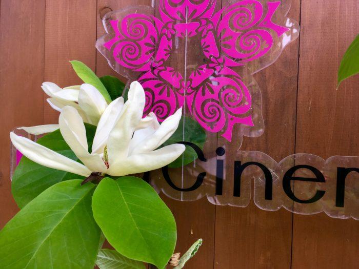 ハナシネマ看板に木蓮の花