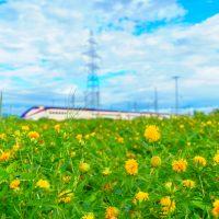 紅花と山形新幹線